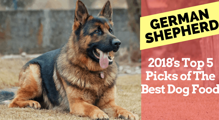 2018 S Top 5 Picks Of Best Dog Food For German Shepherds