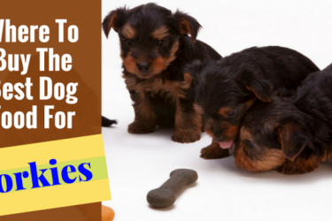 Best Dog Food Brand For Yorkies