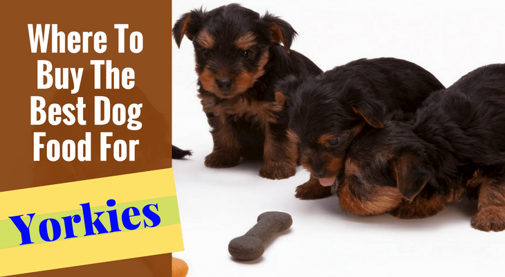 Where To Buy The Best Dog Food For Yorkies Or Yorkie Puppies