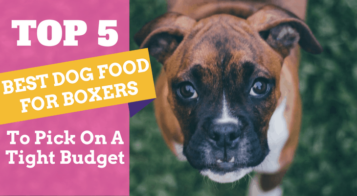 Top 5 Best Dog Food For Boxers To Pick On A Tight Budget