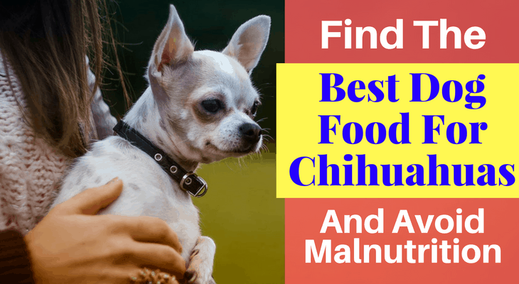 Find The Best Dog Food For Chihuahuas And Avoid Malnutrition