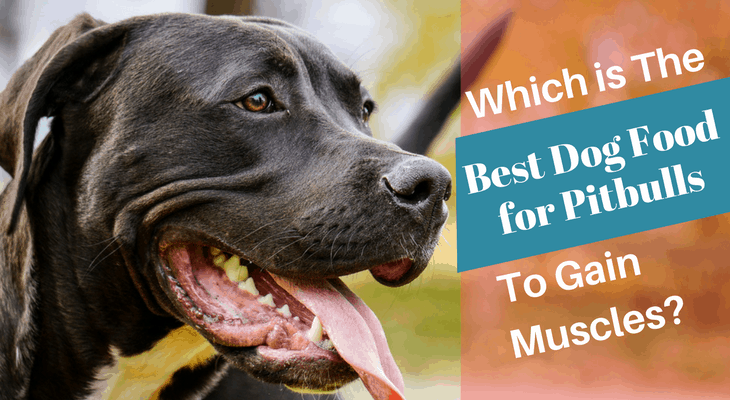 Is Blue Buffalo Good Dog Food For Pitbulls