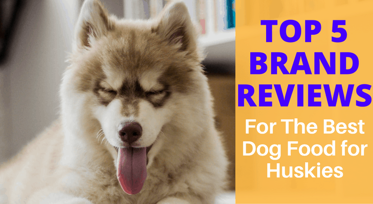 What Is The Best Dog Food For Huskies Top 5 Brand Reviews