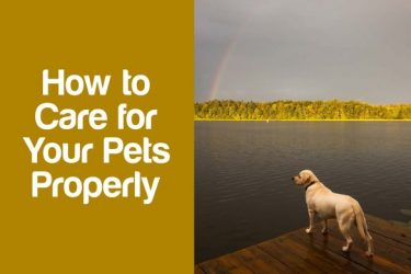 How to Properly Care for Your Pets