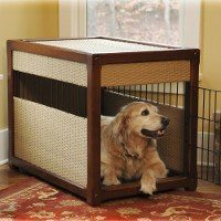 Labrador dog inside kennel or crate