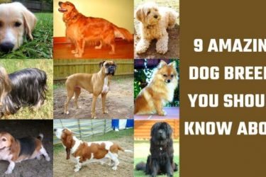 9 Amazing Dog Breeds You Should Know About
