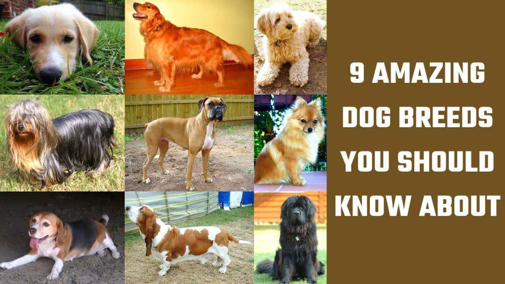 selection of dogs