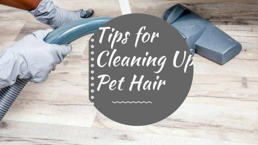 Best Vacuums For Cleaning Pet Hair On Furniture Floor Executives Medium