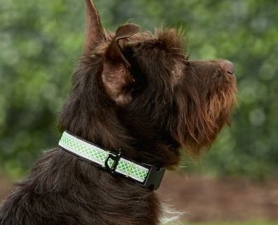 Kurgo Reflective Collar