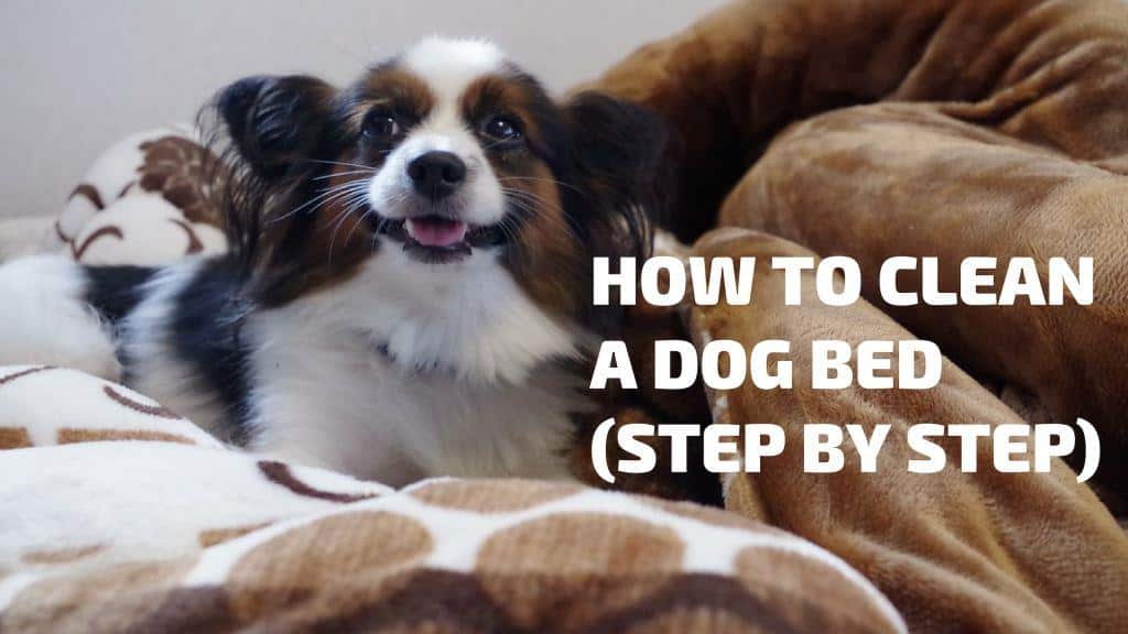 steps on cleaning dog bed