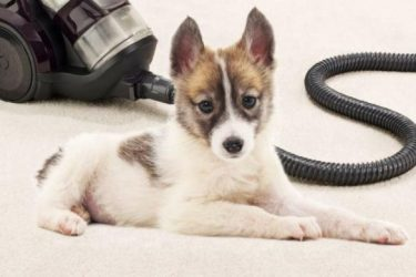 best vacuums for dog hair