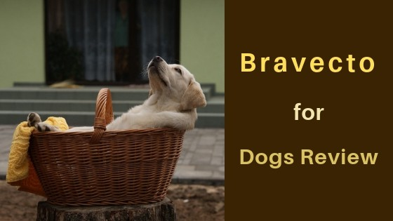 bravecto for dogs review