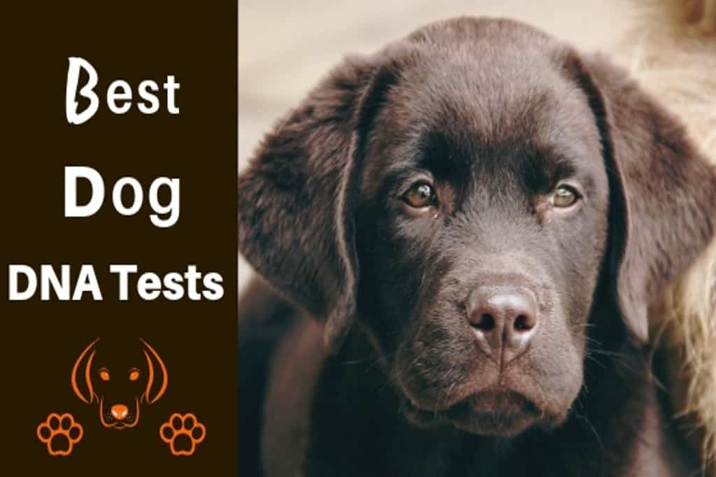 dog dna test reviews