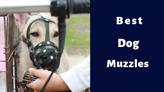 best dog muzzle