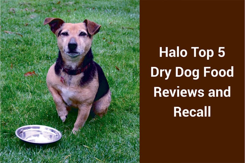 halo dog foods reviews