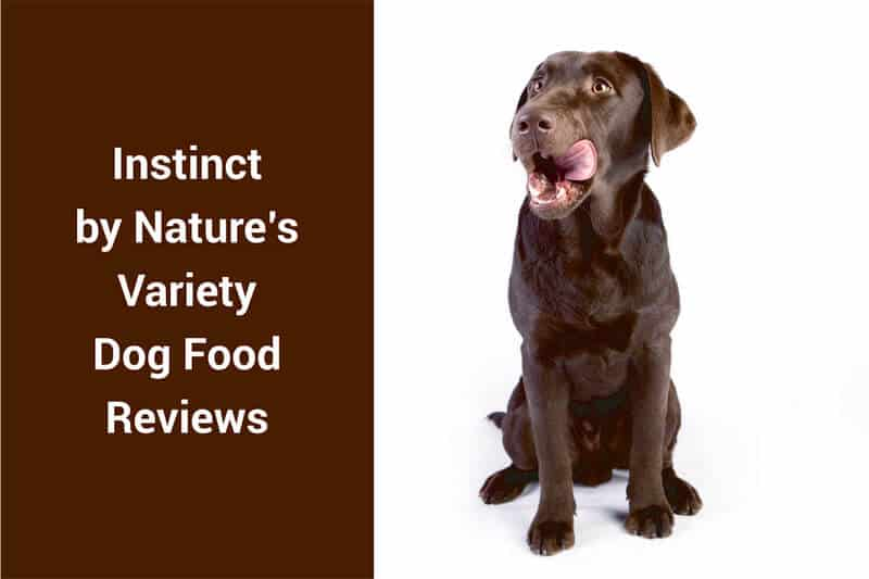 instinct dog food reviews