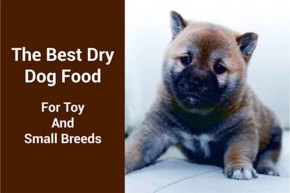 best dog food for toy breeds