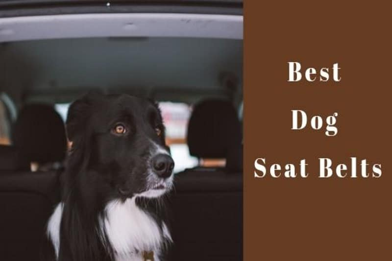 Best Dog Seat Belt >> Top 5 Best Dog Seat Belts To Buy In 2019
