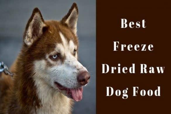 best freeze dried raw dog food