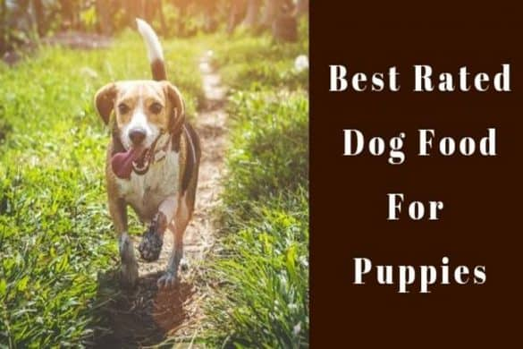 best rated dog food for puppies