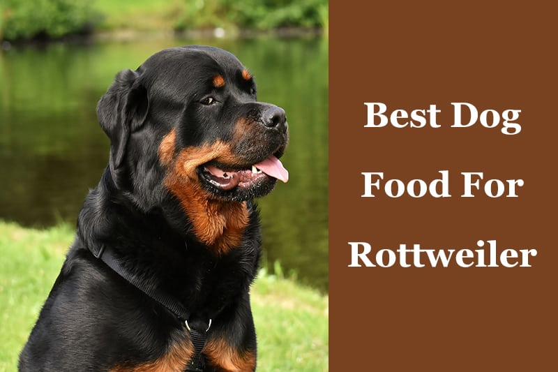 The Best Dog Food For A Rottweiler 7