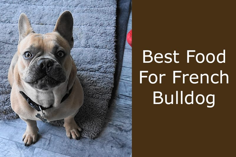 best food for french bulldog