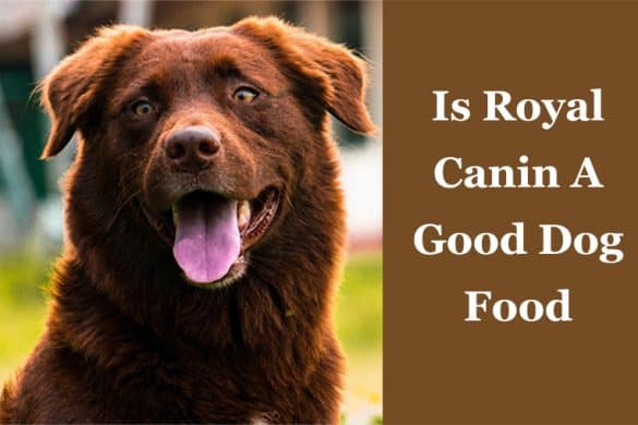 Is Royal Canin A Good Dog Food