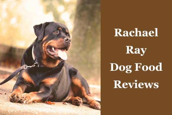 Rachael Ray Dog Food ReviewsRachael Ray Dog Food Reviews