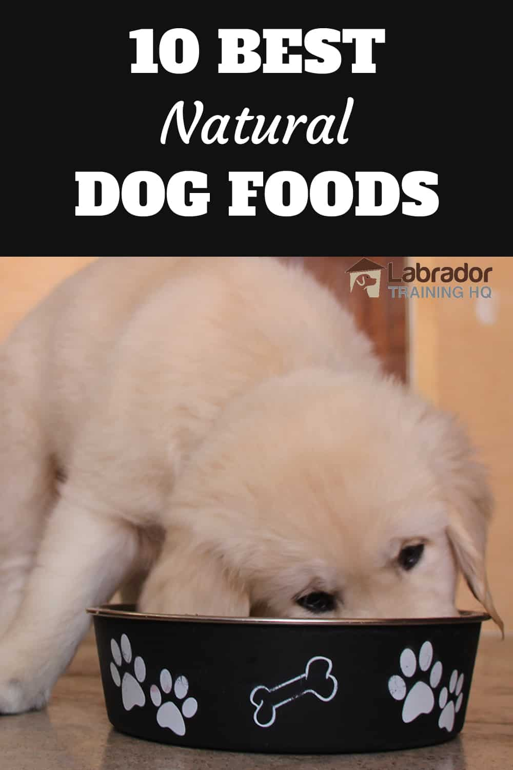 Best Natural Dog Foods - Yellow puppy eating from bowl