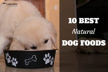 10 Best Natural Dog Foods - Yellow puppy eating out of bowl