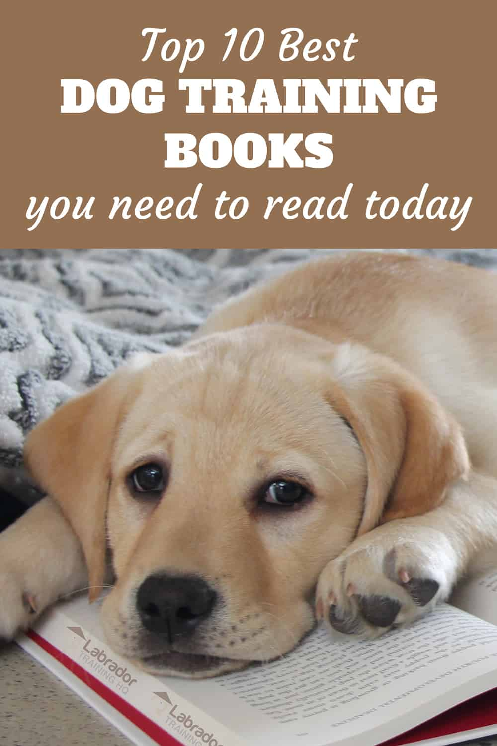 top 10 best dog training books you need to read today - yellow lab puppy lying on open book