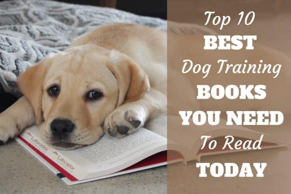 The Best Dog Training Books - Yellow Lab puppy lying on an open book