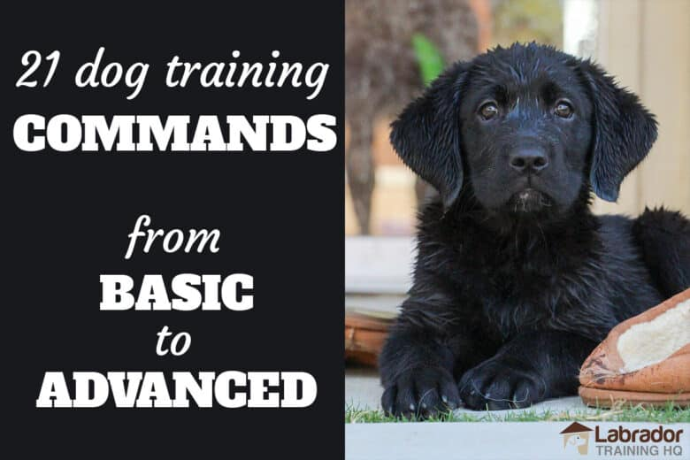 21 Dog Training Commands From Basic To Advanced - Black Labrador Retriever puppy patiently waits in a down-stay next to brown slippers.