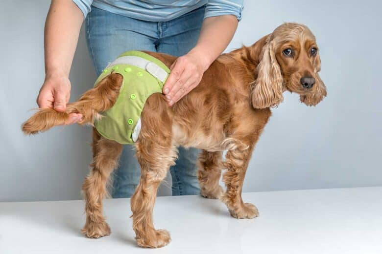 Dog Diapers for Poop - dog standing up wearing green diaper.