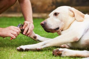 How to clip dog nails when dog is scared of