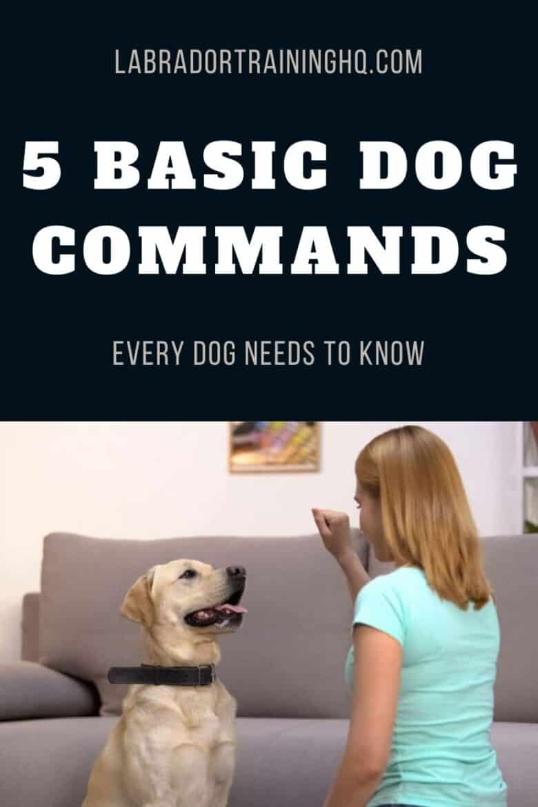 5 Basic Dog Commands Every Dog Needs To Know - Yellow Lab Sitting looking at hand. Lady kneeling with palm closed next to dog.