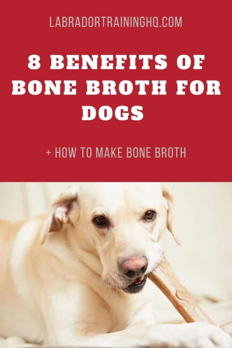 8 Benefits of Bone Broth For Dogs + How To Make Bone Broth - Yellow Lab chewing on a bone.