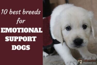 What Breeds Make For The Best Emotional Support Dogs?