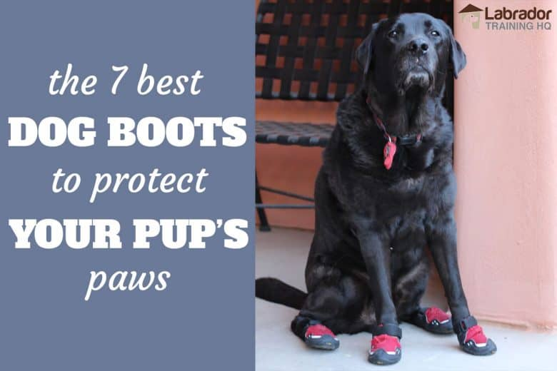 The 7 Best Dog Boots To Protect Your Pup's Paws - Black Labrador sitting with red dog boots on each paws with peach colored walls and chair in background.