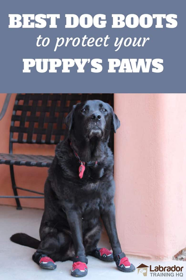 Best Dog Boots To Protect Your Puppy's Paws - Black Labrador Retriever sitting with red dog boots on each paw.