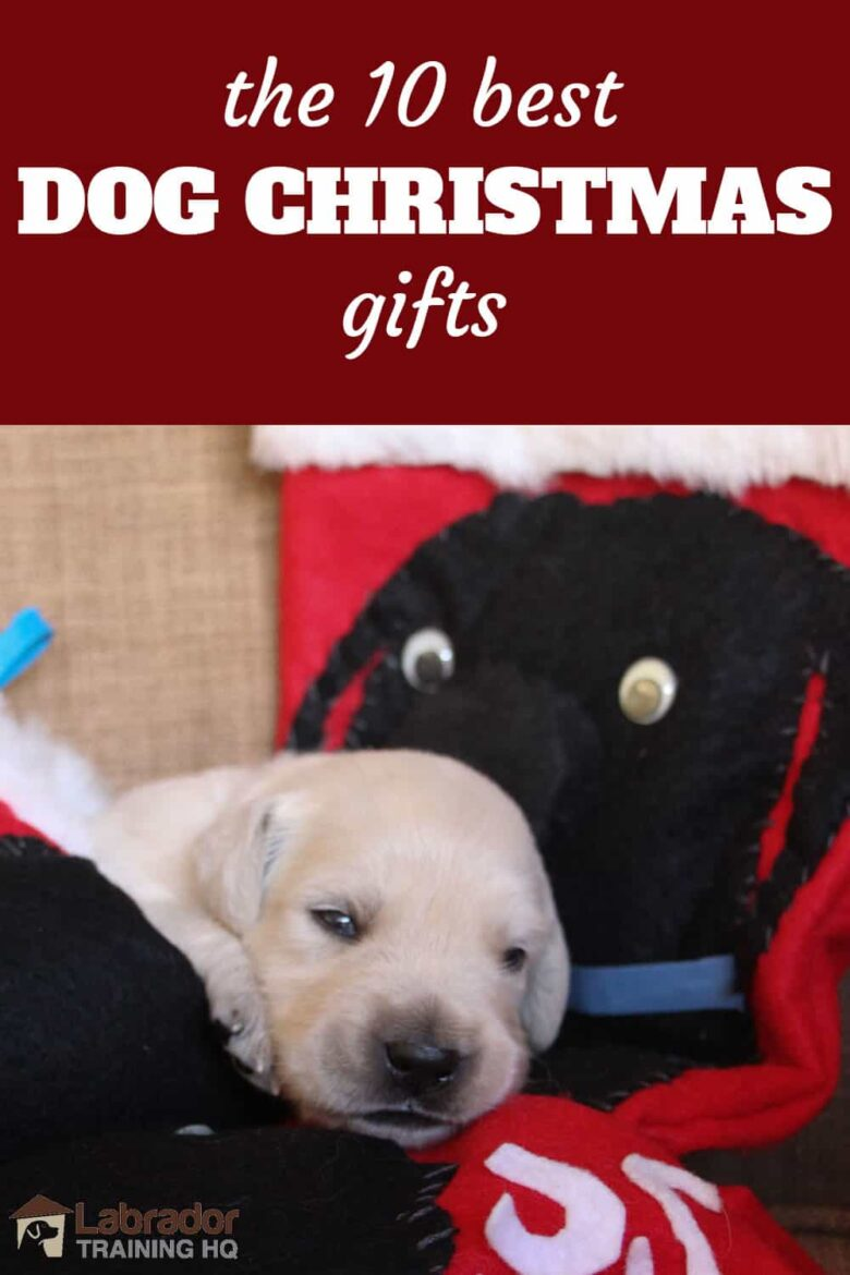 The 10 Best Dog Christmas Gifts - newborn white puppy lying on Christmas stockings with black dogs stitched on.