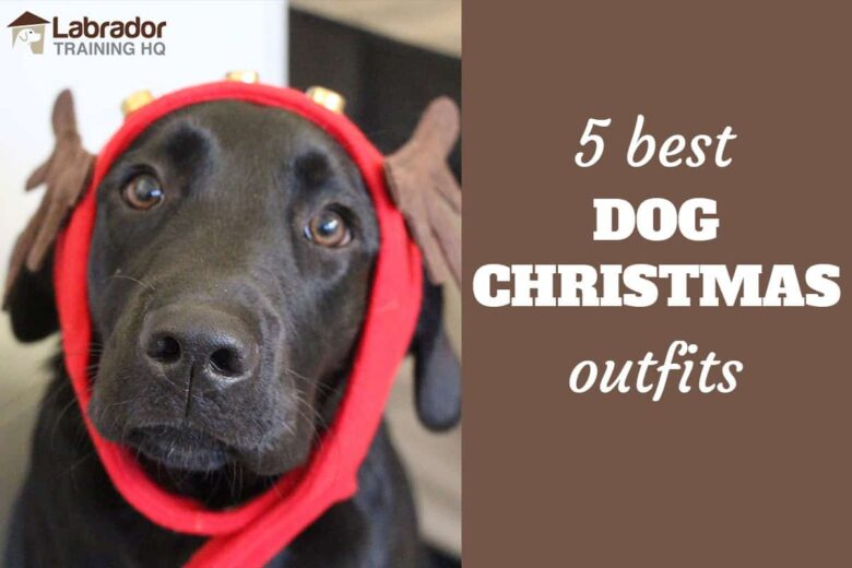 5 Best Dog Christmas Outfits - Black Lab puppy wearing reindeer ears.