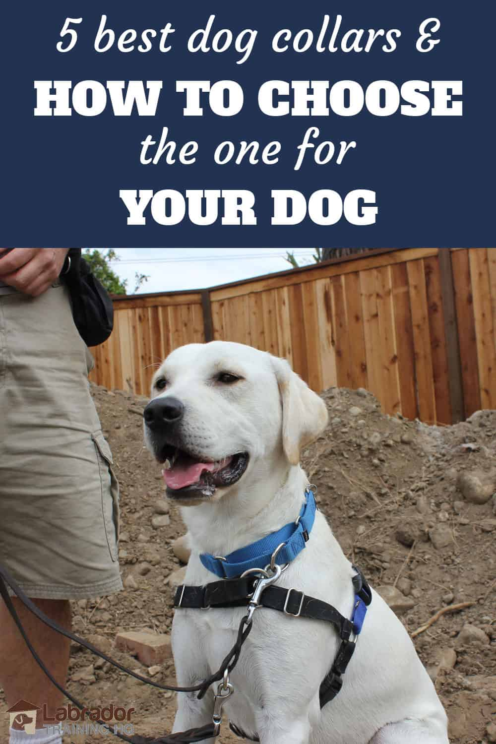 5 best dog collars and how to choose one for your dog. White Labrador Retriever sitting with his mouth open wearing martingale collar and harness
