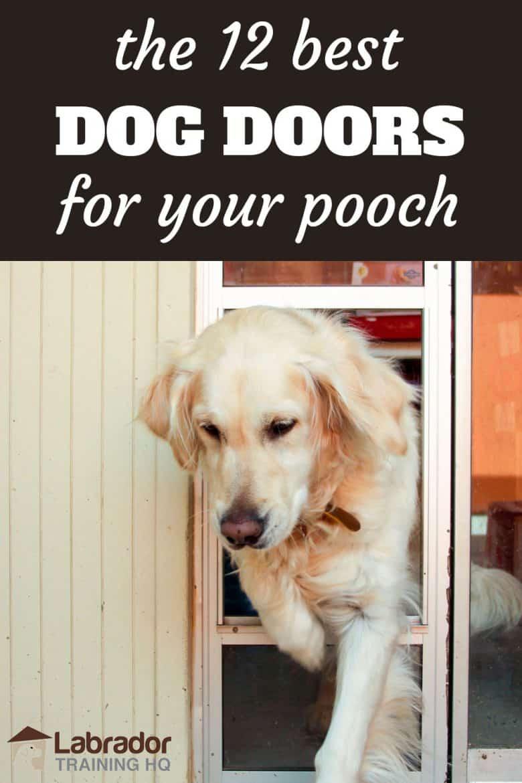 The 12 Best Dog Doors For Your Pooch - Golden Retriever walking through glass sliding door doggy door.