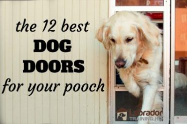 12 Best Dog Doors To Give Your Dog Run Of The House