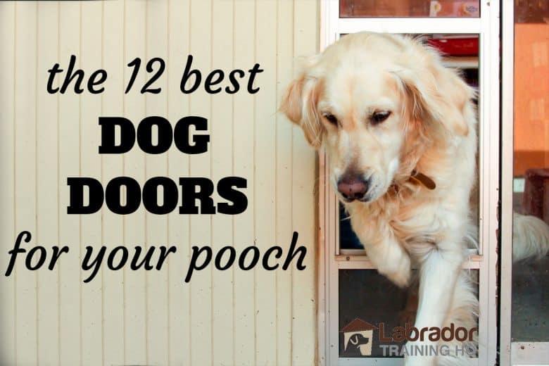 The 12 Best Dog Doors For Your Pooch - Golden Retriever walking through doggy door.