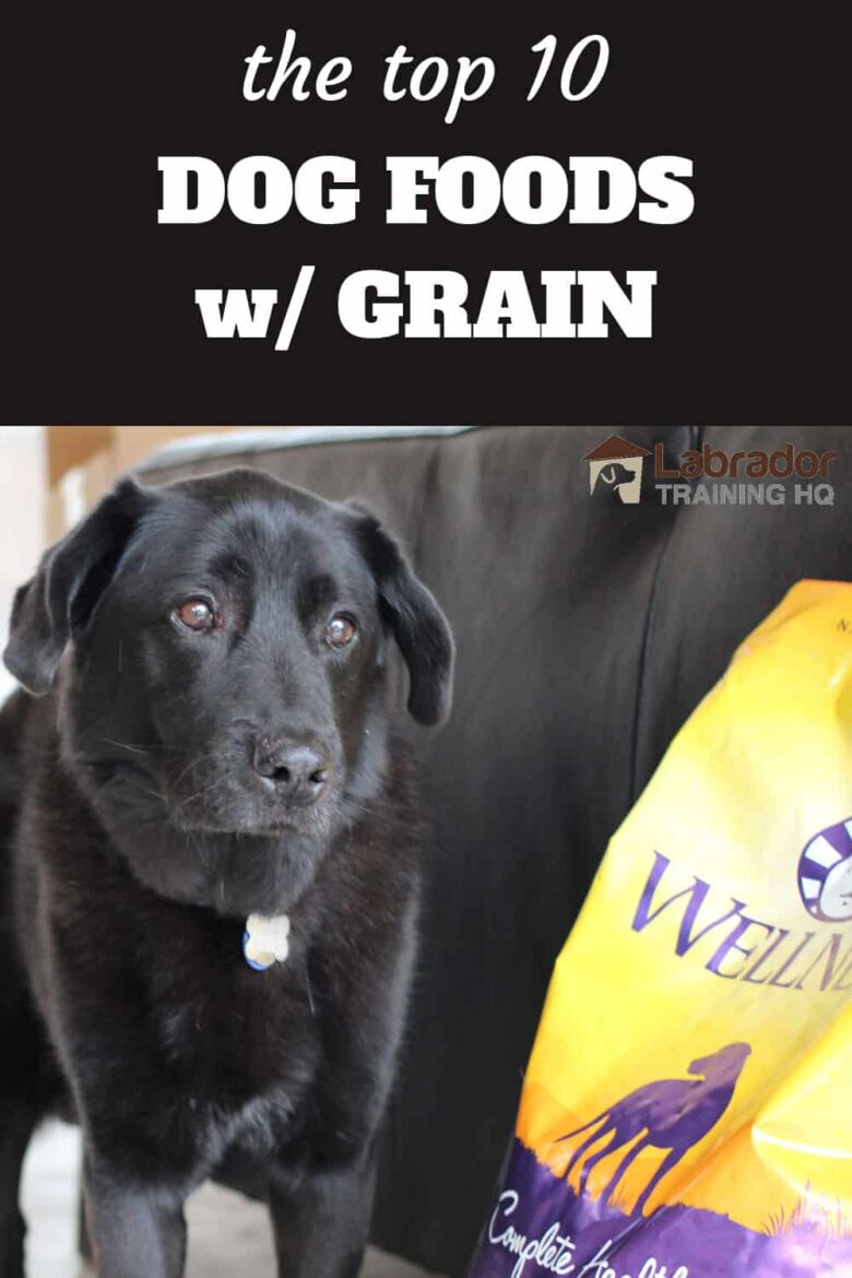 The Top 10 Dog Foods w/ Grain - Black Labrador Mix standing next to a bag of Wellness Dog Food.