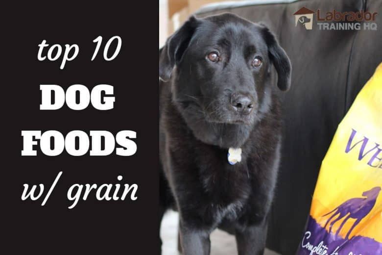 Top 10 Dog Foods With Grain - Black Lab Mix Dog standing next to bag of Wellness Complete Health Dog Food.