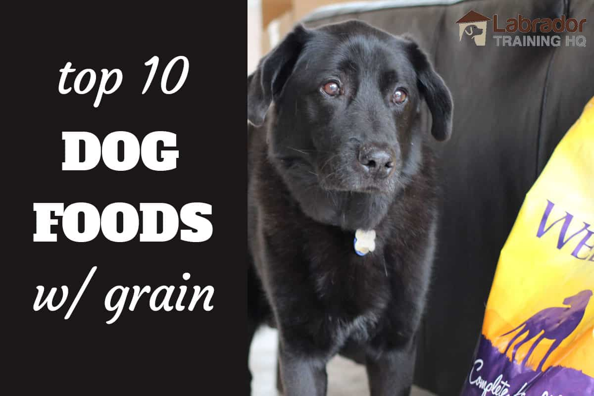 Top 10 Dog Foods With Grain And Why They Are A Healthy Choice