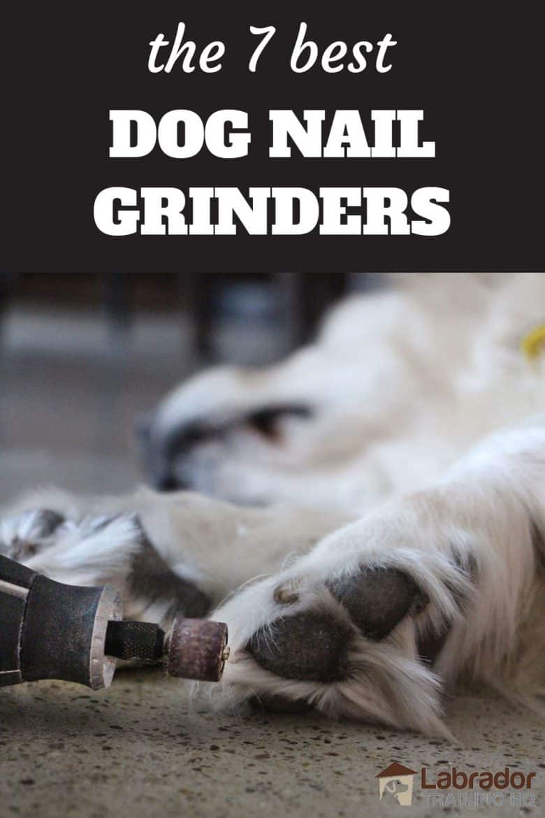 The 7 Best Dog Nail Grinders - Dremel grinding yellow dogs toe nails.